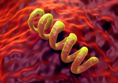La profilaxis con doxiciclina es una opción efectiva para las ITS bacterianas