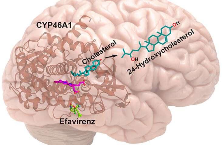 Estudio examina el potencial de los medicamentos contra el VIH para tratar el Alzheimer