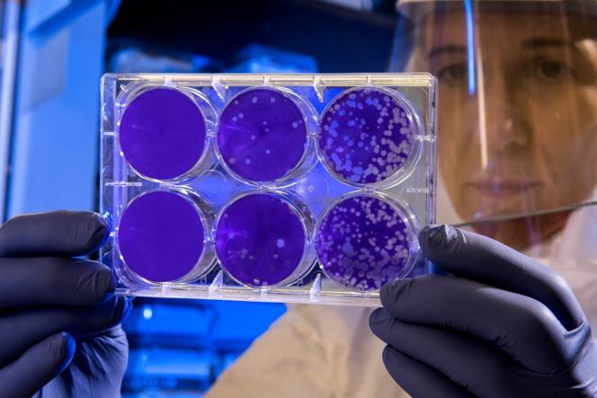 Un antiviral basado en derivados de la glucosa destruye las partículas infecciosas por simple contacto incluyendo coronavirus